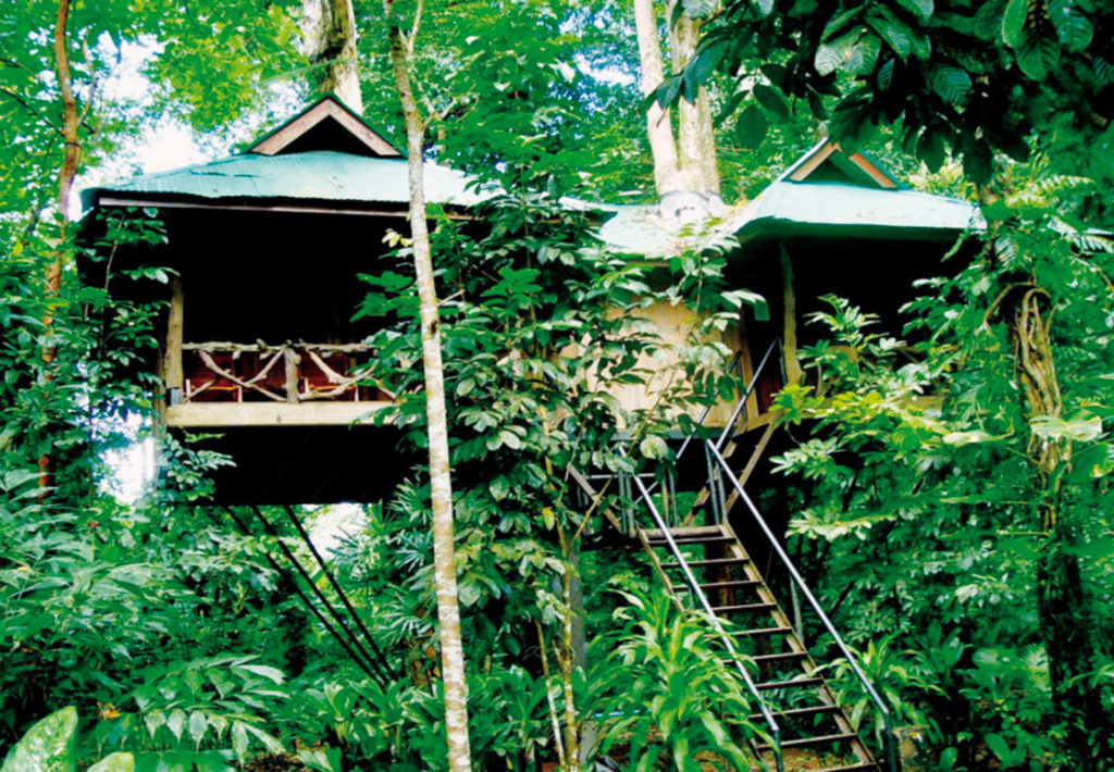 Khao Sok Tree House Accommodation
