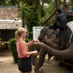 Elephants feeding after trekking
