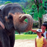Meet elephants on our Khao Sok tour