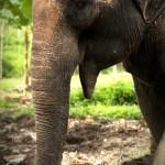 Elephant trekkking