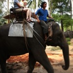 Elephant Trekking in Sai Roong Elephant Camp