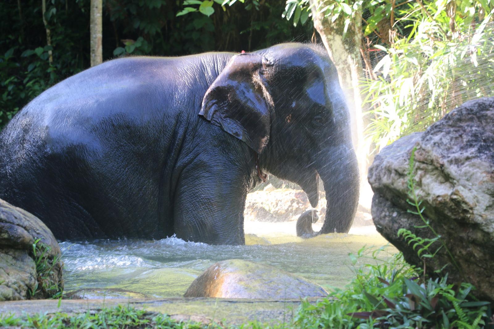 Excursions avec des Elephantes